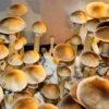 Burma Spores