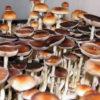 PES Amazonian Spores